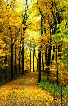 A yellow tree road