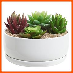 6 inch Modern White Ceramic Round Designer Succulent Planter / Cactus Pot / Decorative Flower Holder Bowl - Lets plant (*Amazon Partner-Link)