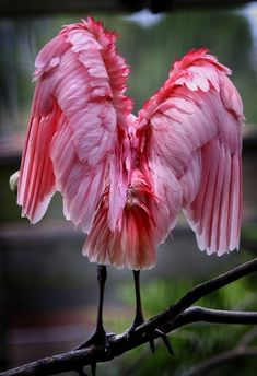 yodewandadawan:    (via Photography (No Nudity) / Pink flamingo)