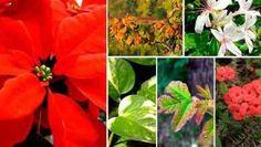 plantas que irritan la piel