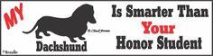 Dachshund Bumper Sticker Honor Student $4.95