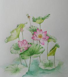 이미지: 식물, 꽃 Lotus, Photo And Video, Plants, Painting, Instagram, Digital, Lotus Flower, Painting Art, Paintings