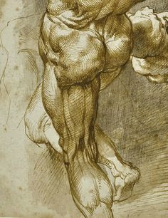 Sir Peter Paul Rubens (Siegen 1577 - 1640 Antwerp), Anatomical studies of three male figures - Alain. Anatomy Sketches, Anatomy Drawing, Drawing Sketches, Art Drawings, Body Drawing, Life Drawing, Figure Drawing, Painting & Drawing, Peter Paul Rubens