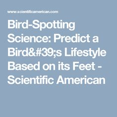 Bird-Spotting Science: Predict a Bird's Lifestyle Based on its Feet - Scientific American