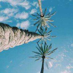 Leave your worries under the palm trees #SummerGambettes