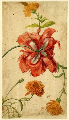 Beautiful watercolours by Dutch artist Jan van Huysum: http://thesnailandthecyclops.blogspot.com/2011/07/flower-study-formerly-in-album.html