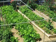 Fruit Cages | Vegetable Cages | Crop Protection | Auckland NZ | Gardening |  Pinterest | Crop Protection And Gardens
