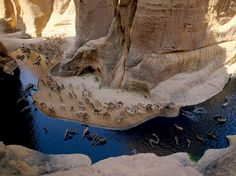 Camels Drinking from Oasis in The Desert