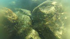 Sealife 2016 - Rapallo a Cinque terre cost