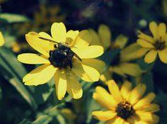 Title  Happy Bee   Artist  Laurie Perry   Medium  Photograph - Photography