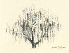 willow tree drawing - Google Search