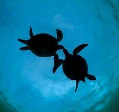 Honu Honi, Turtle Kiss. Photo by Wendy Savary, courtesy of Ocean Defender-Hawaii.