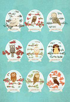 Owl id chart  | Stephanie Fizer Coleman