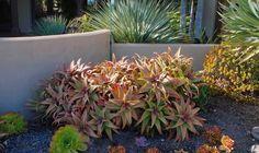 Aloes! (Deeter Buckner Design: New Photos of A Stunning Mature Garden in Rancho Santa Fe)