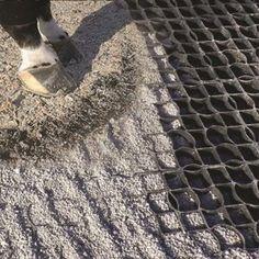 muddy paddock, mud horse, muddy hooves, footing grid, horse sacrifice area, horse paddock, pasture management