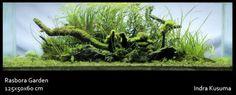 'Rasbora Garden' by Indra Kusuma The perfect island style