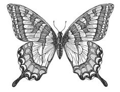 butterfly pencil drawing - Google Search