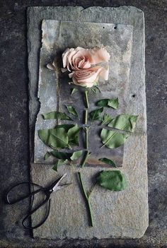 This is a good example of Order and/or Disorder because the flower is ordered because it is all in line but is disordered because it has been cut up.