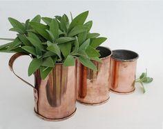 Hey, I found this really awesome Etsy listing at https://www.etsy.com/uk/listing/243664180/vintage-copper-measuring-cups-copper