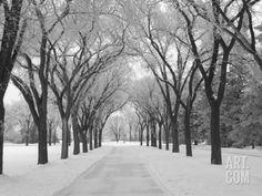 Winnipeg Manitoba, Canada Winter Scenes Photographic Print by Keith Levit at Art.com