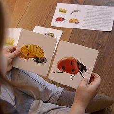 Príbehy prírody - kartičky životných cyklov / Sojkovie - SAShE.sk - Handmade Hračky Thing 1
