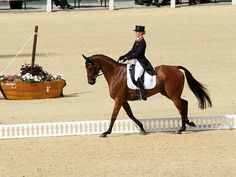 Zara Phillips - Olympic Equestrian Event London 30 July 2012 - Russell Marsh - Picasa Web Albums