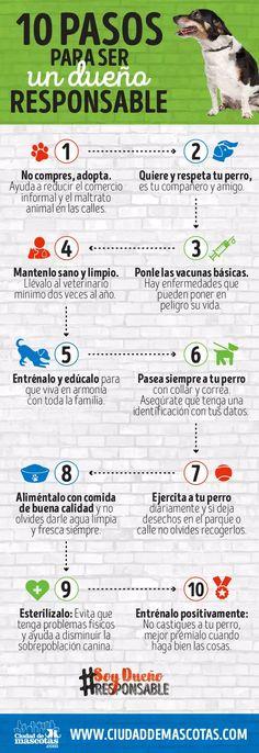 infografia-pasos-para-ser-un-dueno-responsable