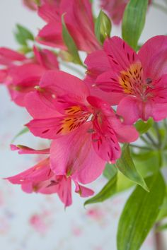 Alstromeria: pink. This bright flower represents friendship, the long-lasting beauty of commitment and care.