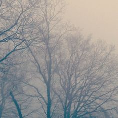 """Cold morning.  #freezing #winter #cold #fog #morning #trees #brrr"""