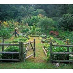 Vegetable Garden Design Ideas, Pictures, Remodel, and Decor - page 6