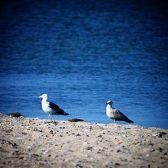 Måger ved Assens Næs #visitfyn #fyn #nature #nature_perfection #mast #nofilter #natur #denmark #landscape #assensnatur #assens #mitassens #vildmedfyn #fynerfin #vielskernaturen #visitassens #instapic #oktober