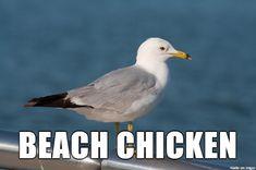 Beach chicken