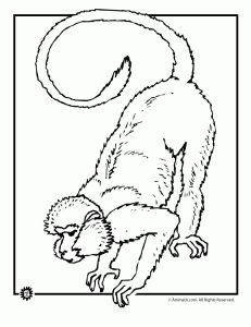 rainforest animals coloring pages monkey coloring page 2 231x300 monkey coloring pages