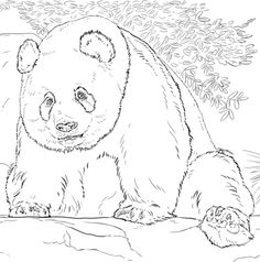 Coloring of Page Realistic Zoo