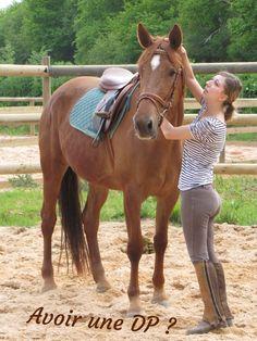 Avoir un cheval en demi-pension - Le Blog cheval et moi Challenge Instagram, Blog, Horses, Animals, Pony, Horse, Unicorns, Animais, Animales