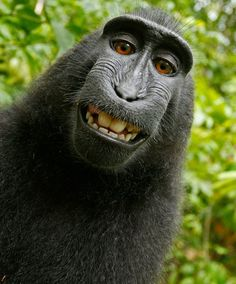 Retarded gorilla