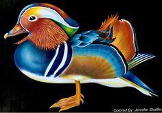 Mandarin Duck by Jennifer Rose Shaffer