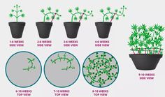Low Stress Cannabis Training For Maximum Yield Here, You want to be able to control the plant growth and get maximum yield out of every plant, even in a....