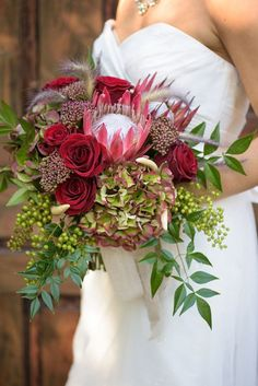 Gaslamp Floral - I like the idea of using this green and burgundy tipped hydrangea paired with the protea - very cool look! Protea Wedding, Hydrangea Bouquet Wedding, Floral Wedding, Wedding Flowers, Winter Bridal Bouquets, Bride Bouquets, Bridesmaid Bouquet, Protea Bouquet, Ideas