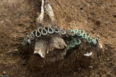 La Tène Era 'Celtic' Burials from France - 'Snake' bracelet (© Denis Gliksman, Inrap)