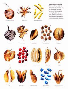Seeds Worth Saving via marshallmatlock: Besides providing food, trees and plants procude fiber, control wind erosion and shade livestock. #Agriculture #Seeds