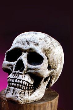Skull Head with Lower Jaw Accessory. Perfect for your Halloween party. Halloween Skull, Halloween Party, Motorcycle Tank, Shops, Skull Decor, Skull Head, Skull Design, Halloween Decorations, Horror