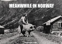 Meanwhile in Norway meme. Woman riding pig. From Norskarv.com.