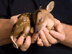 手乗りの動物赤ちゃん