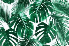 tropisch behangpapier interieur