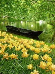 Yellow daffodils and a boat, beautiful scenic environment