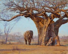 sammelsurium Ancient Ones, 2012 - Works - Wildlife Art of John Banovich Using A Room Humidifier For Wildlife Paintings, Wildlife Art, African Animals, African Art, John Banovich, Foto Portrait, Pencil Portrait, Baobab Tree, African Forest Elephant