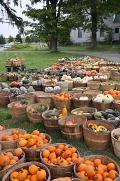Pumpkins and gourds for Fall
