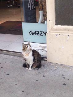 E os gatos do Bom Retiro desejam bom dia!