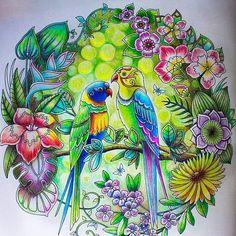 Colorido lindo d+!!!!! @Regrann from @willowstails -  Johanna Basfords Magical  Jungle #johannabasford #magicaljungle #adultcoloringbook #prismacolor #Regrann #artecomoterapia #arttherapy #instaart #instacoloring #coloriage #coloring #lapisdecor $colouredpencils #mycreativeescape #mystaedtler #selvamagica